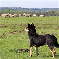 Sheepdog guards like mt4 copier trades